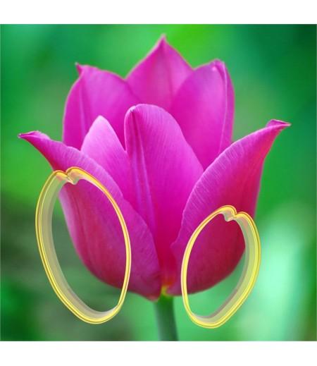 Lale Çiçeği Yapma Seti, Polikarbon